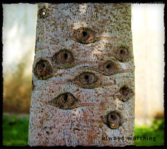 30 May - trees have eyes2