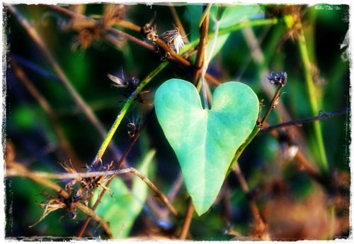 12 oct - heart leaf